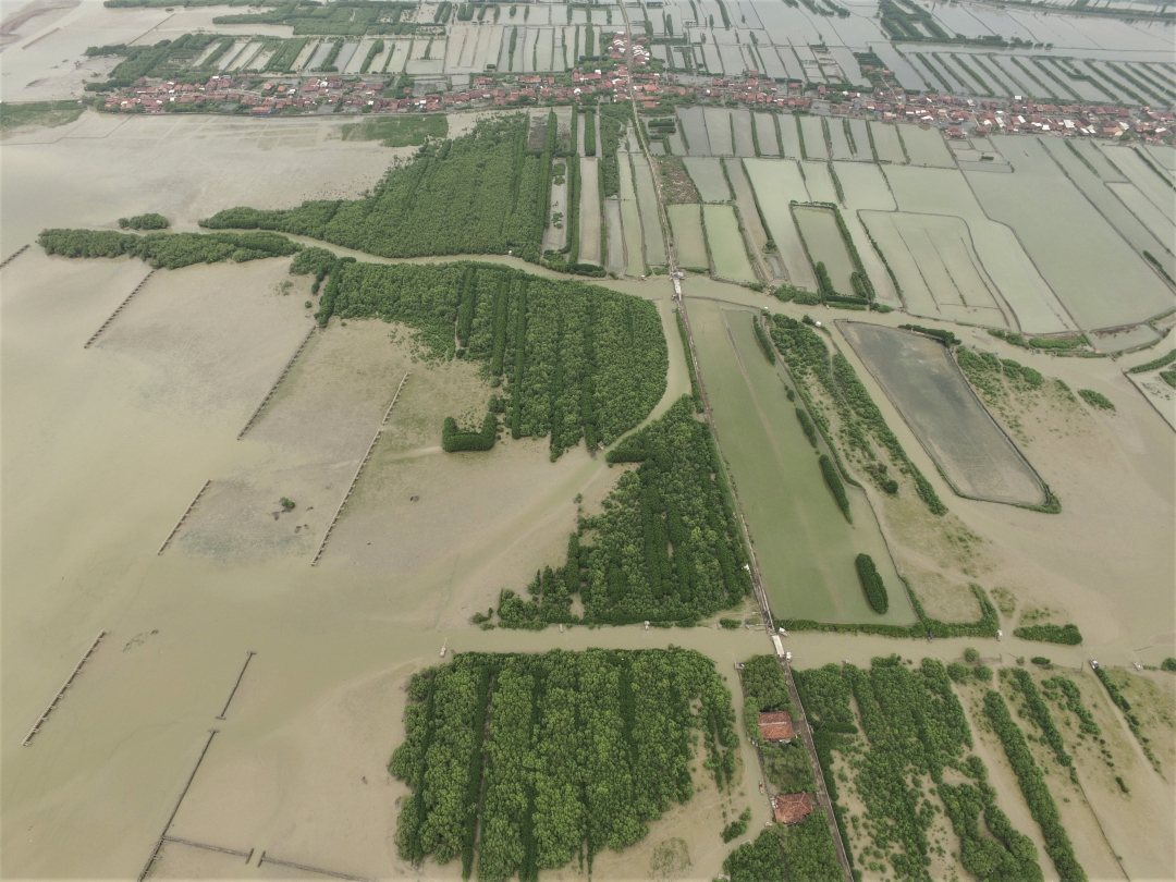 Coastal mangrove restoration project Demak, Java
