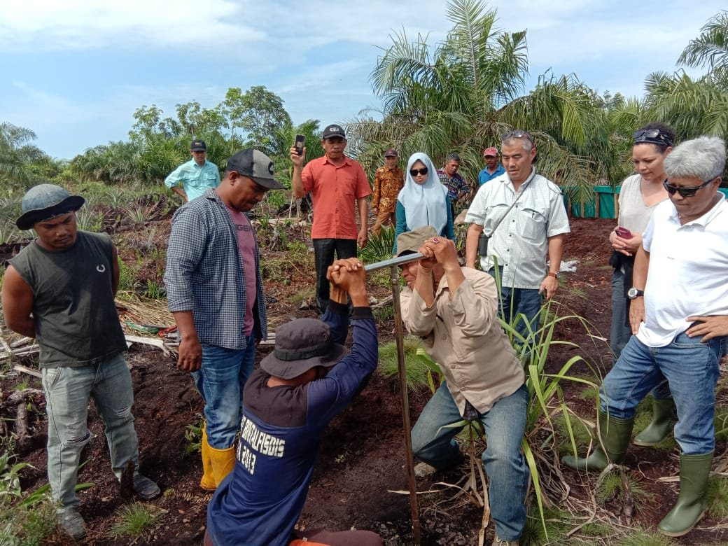 Investigation of peat soil in Indonesia